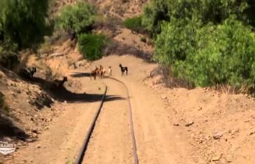Des trains pas comme les autres : Bolivie